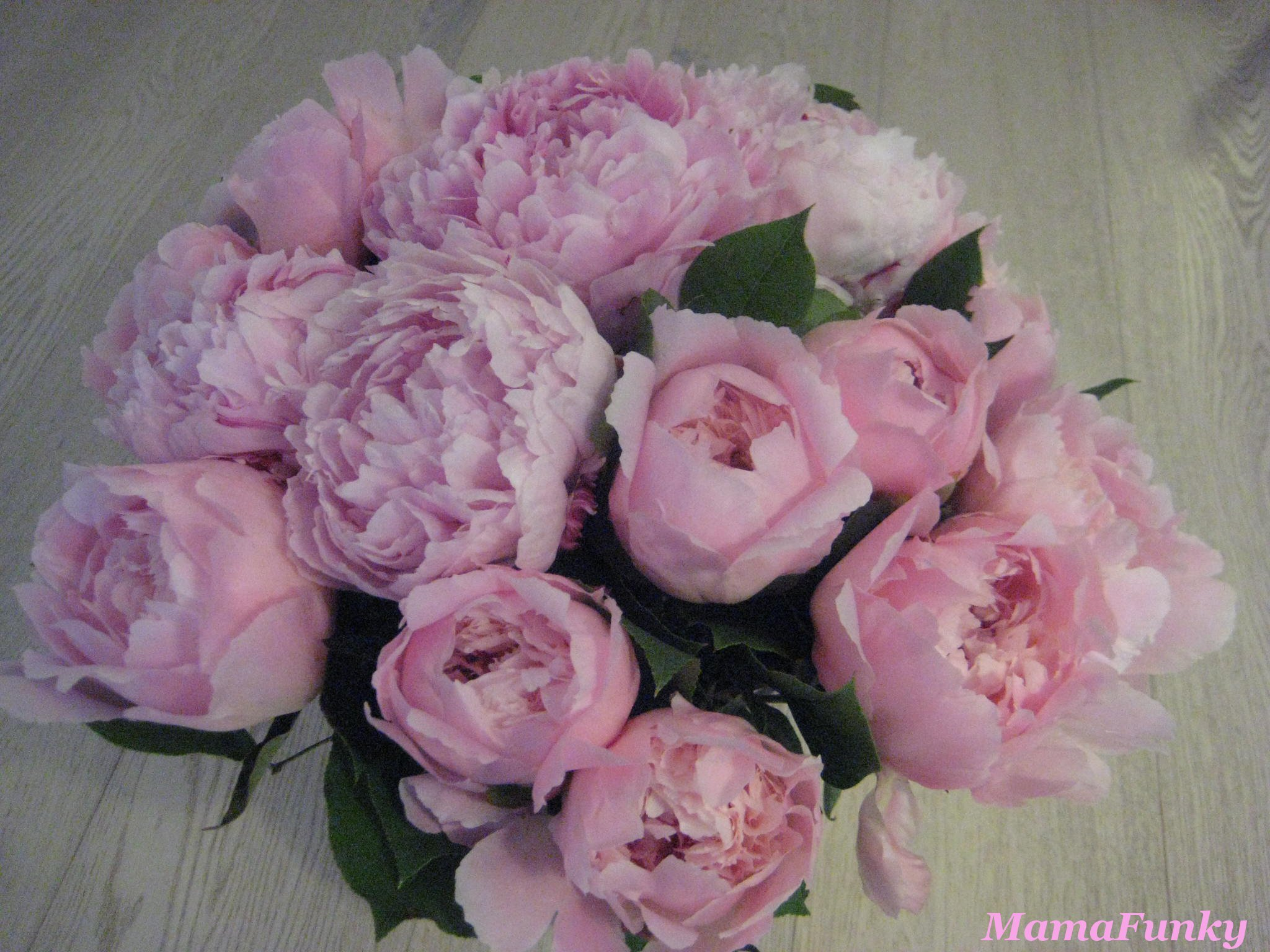 Mamafunky Je Vois La Vie En Rose Pivoine Mamafunky