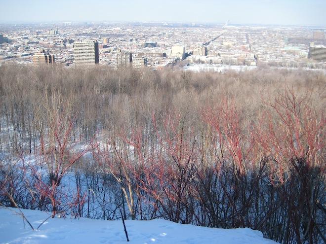 Voyage au Québec_Février 2008 301