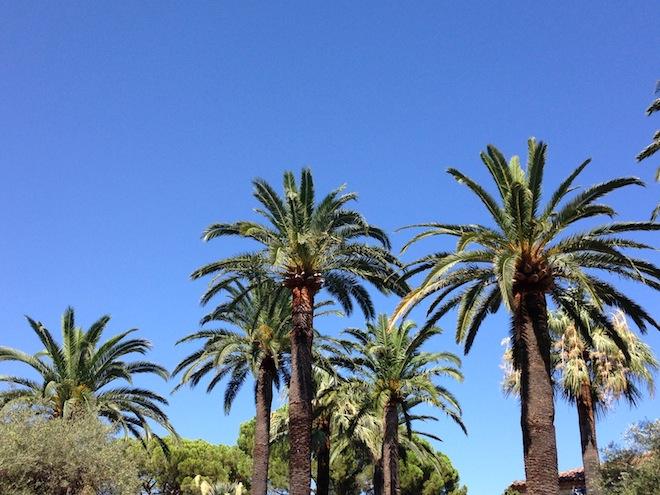 cap-d-antibes-palmiers