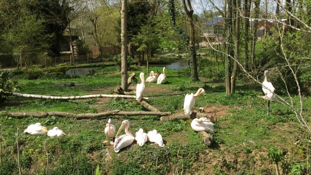 zoo de Cerza Normandie